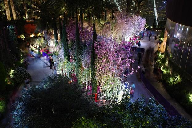 Sakura Matsuri @ Flower Dome