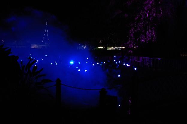 Vivid Sydney Botanic Gardens