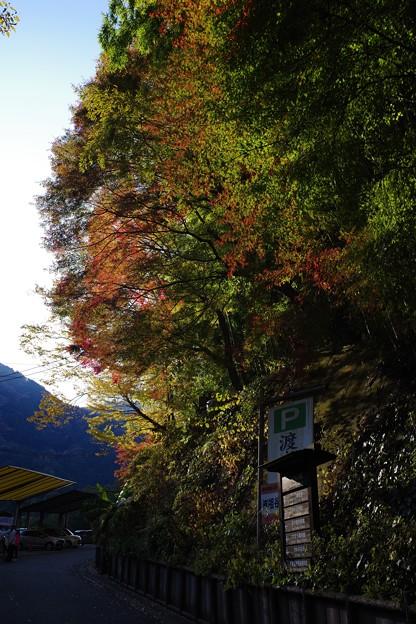 かずら橋の紅葉