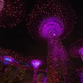 Photos: Christmas Wonderland at Gardens by the Bay