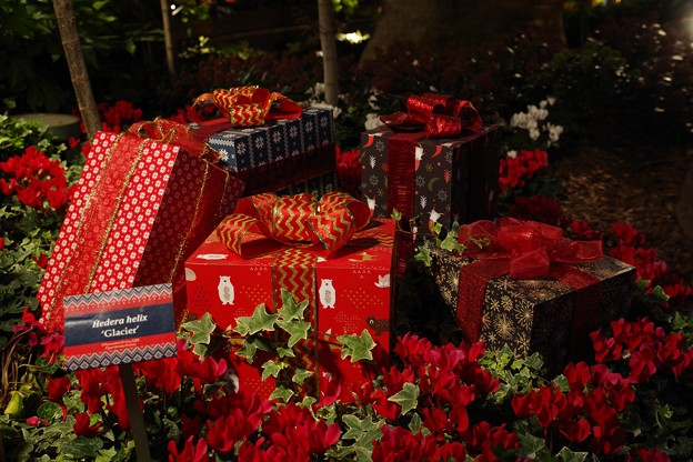 Gardens by the Bay Poinsettia Wishes 2019