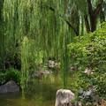 Photos: Chinese Garden of Friendship