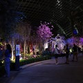 Photos: Sakura Matsuri @ Gardens by the Bay