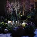 Photos: Sakura Matsuri @ Gardens by the Bay