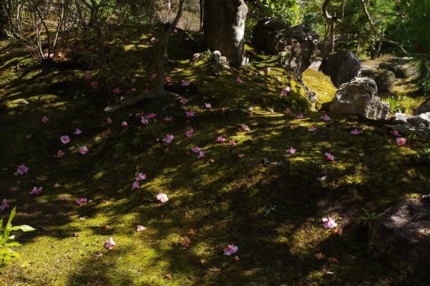 等持院庭園
