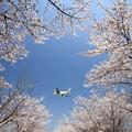 写真: 春満開♪