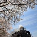 Photos: 春満開SLロマン