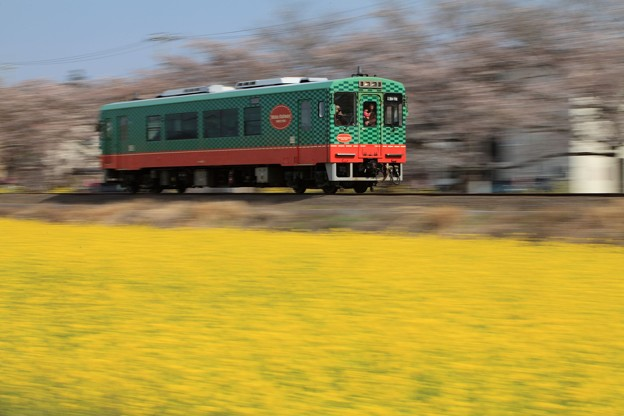 Photos: 春のローカル線?
