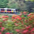 Photos: 春の水郡線♪