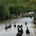 秋のお散歩♪