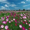 Photos: 花咲く成田線♪