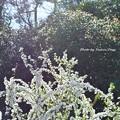 Photos: 桜よりこちらの方がいいかなぁ~