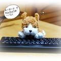Photos: 我が家のマスコット犬?(1)