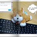 Photos: 我が家のマスコット犬?(2)