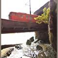 Photos: 渓谷のローカル線2