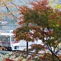 Photos: 秋を訪ねて
