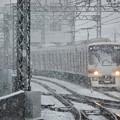 Photos: 雪まみれ(2)