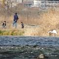 Photos: 川辺の眺め