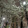 Photos: 春の東京(3)