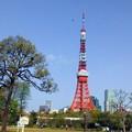 東京タワー(1)