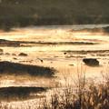 霧の河川敷(夜明後)