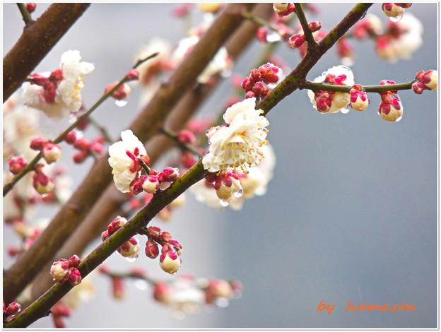 春雨の中で(2)