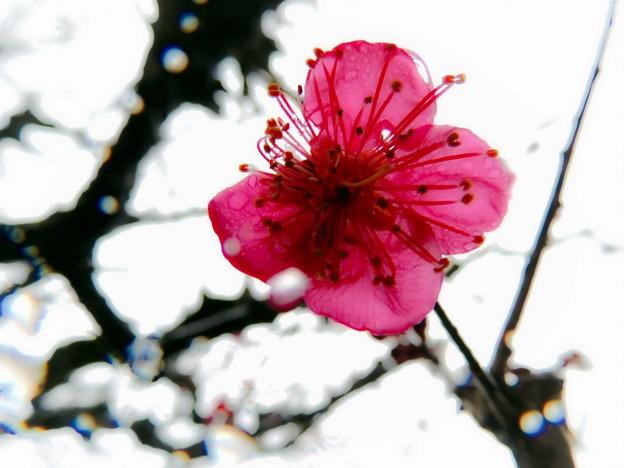 春雨の中で(3)