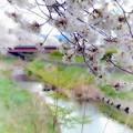 春の小川(3)2014
