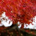 三国堀付近の紅葉その1