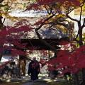 円覚寺の居士林