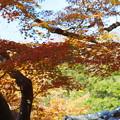 北鎌倉の紅葉の色付き