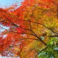 円覚寺の紅葉グラデーション