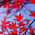 紅葉も終わり