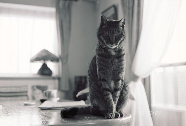 Photos: Kodak BW400CN試写@猫1