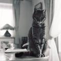 Kodak BW400CN試写@猫1