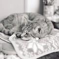 Kodak BW400CN試写@猫2