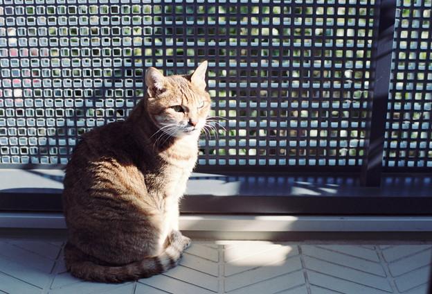 Photos: Kodak PORTRA160試写@猫1