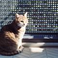 Kodak PORTRA160試写@猫1
