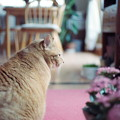Kodak PORTRA160試写@猫2