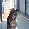Kodak PORTRA160試写@猫3