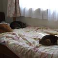 Photos: 母ちゃんの寝床、占拠