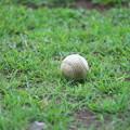 Photos: 白球