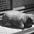香箱にならない猫(ILFORD XP2 SUPER 400試写)