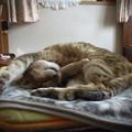 Photos: PENTAX Q10 with CINE-W.ARCO 6.5mm F1.4@猫で試写