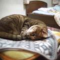Photos: PENTAX Q10 with CINE-W.ARCO 6.5mm F1.4@猫で試写その2