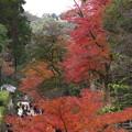 鎌倉の紅葉って
