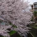 2014年の桜(穴場スポット)
