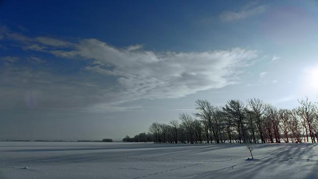 霧氷防風林