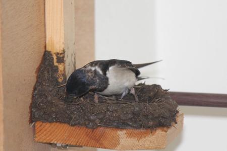 巣作りママ