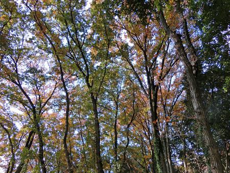 ドングリの林